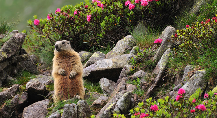 No Matter What the Groundhog Says, Here are 5 Reasons to Sell Before Spring! | MyKCM