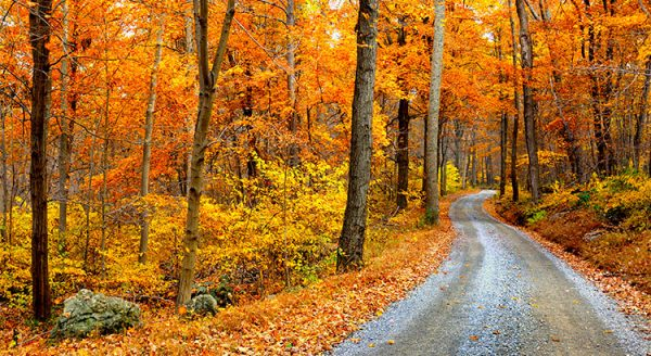 4 Reasons to Buy a Home This Fall! | MyKCM